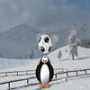 Pingvin fudbaler